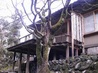 美山荘離れ 石楠花.JPG